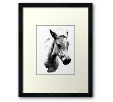 Horse Face and Head. Digital Farm Animal Engraving Image Framed Print