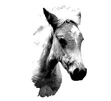 Horse Face and Head. Digital Farm Animal Engraving Image Photographic Print