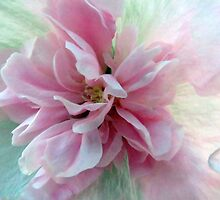 Double Hollyhock by trueblvr