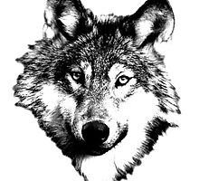 Wise Wolf Face. Animal Prints. Digital Wildlife Engravings. by digitaleclectic