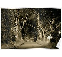 The Dark Hedges of Stranocum, Ballymoney, County Antrim Poster