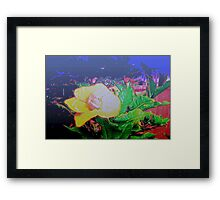 Our tropical nights Framed Print