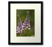 Wild Flower of Western Australia Framed Print