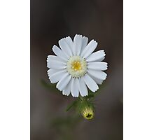 Wild Flower of Western Australia Photographic Print