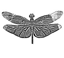 Dragonfly Digital Engraving. Insect Digital Art. by digitaleclectic
