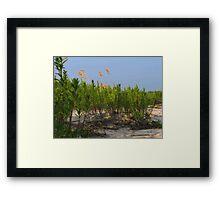 Sand Dune Weeds Framed Print
