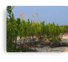 Sand Dune Weeds Canvas Print