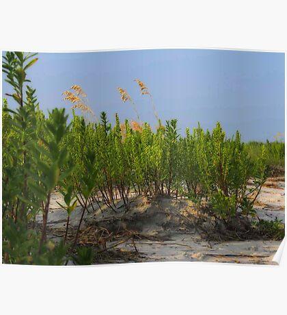 Sand Dune Weeds Poster