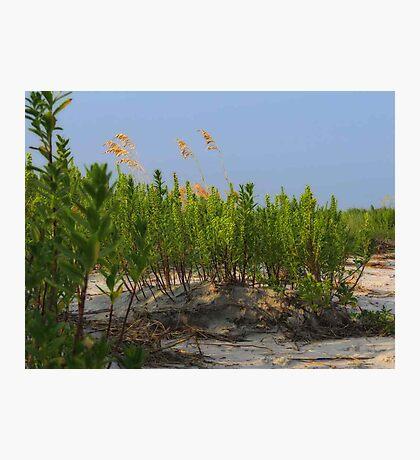 Sand Dune Weeds Photographic Print