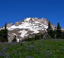 Wildflowers on Mt. Hood by sketchpoet