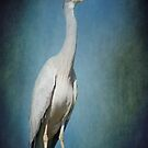 A Heron in my Garden by Clare Colins