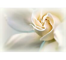 White Gardenia Photographic Print