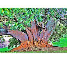 picton tree Photographic Print