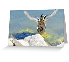 duck 221 Greeting Card
