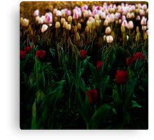 Bloomin' lovely Canvas Print