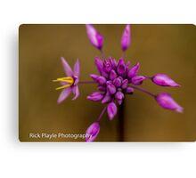 Purple Tassels Canvas Print