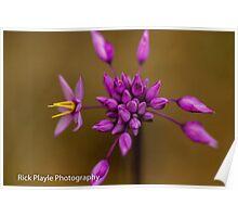 Purple Tassels Poster