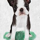 Boston Terrier puppy by Cazzie Cathcart