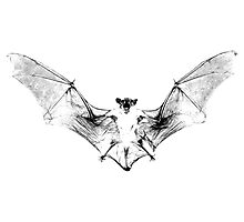 Vampire Bat Halloween Digital Engraving Image. Photographic Print