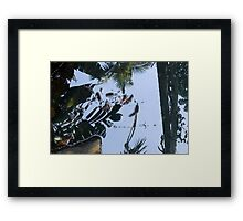 Where Giant Water Striders Live Framed Print