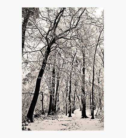 Snow Scene #3 Photographic Print