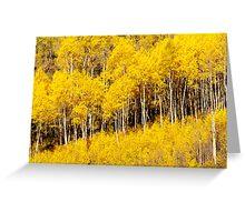 Golden Fall Aspens Greeting Card