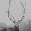 The deer by Laure-b