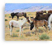 Foal Friends. Canvas Print