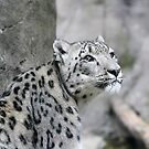 Snow Leopard by Karl R. Martin