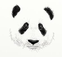 Panda by Laure-b