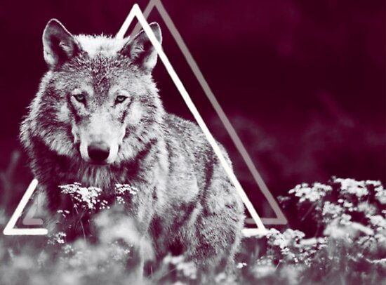 Wolf by Laure-b