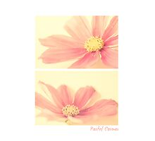 Pastel Cosmos Diptych by Nicola  Pearson