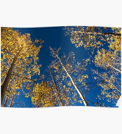 Blue Skies and Gold Leaves Poster