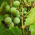 Grapes by WildestArt