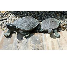 Turtle Twins Photographic Print