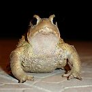 Common European Toad by taiche