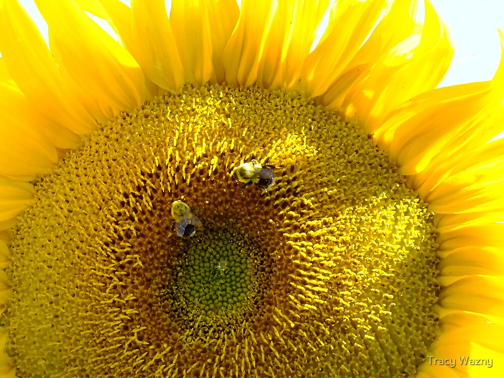 Two Busy Bees And The Blazing Sunflower by Tracy Wazny