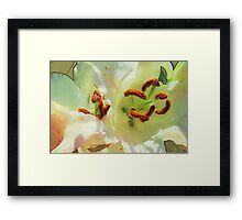 Lily Transformed Framed Print