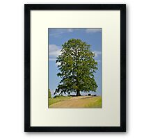 A Lonely Tree Framed Print