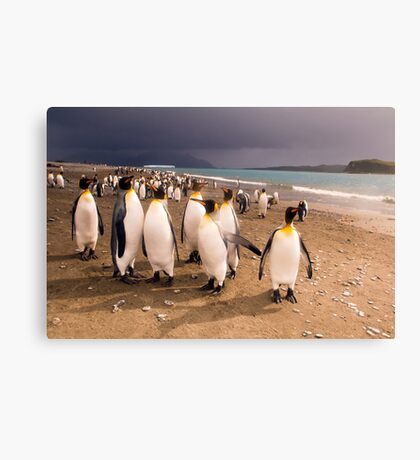 Penguin Paradise Canvas Print
