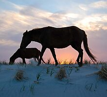 Onward Bound-Assateague Island Wild Horses, Maryland by Sandra Fazenbaker