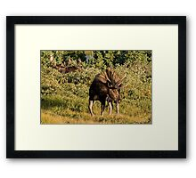 Moose tongue Framed Print
