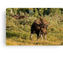 Moose tongue Canvas Print