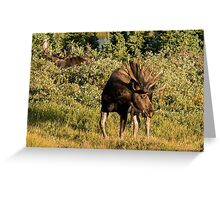 Moose tongue Greeting Card
