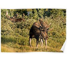 Moose tongue Poster