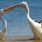 Pelican Kisses  by Trish Threlfall