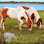 Pair Of Painted Horses-Assateague Island, Maryland by Sandra Fazenbaker