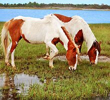 Pair Of Painted Horses-Assateague Island, Maryland by Sandy O'Toole