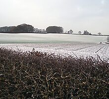 Country Fields: Winter #2 by PolydsignStudio
