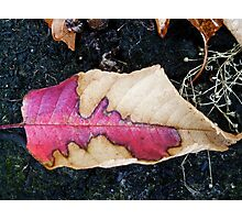 Do Leaves Get Birth Marks? Photographic Print
